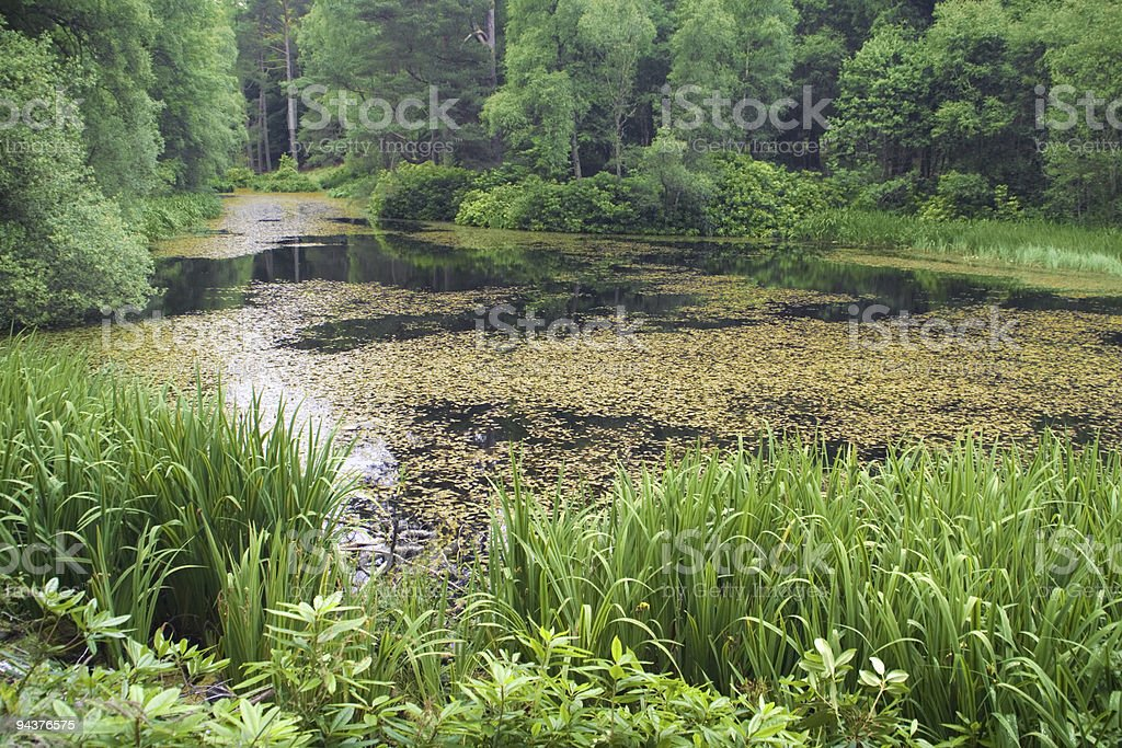 Tranquil forest lake royalty-free stock photo
