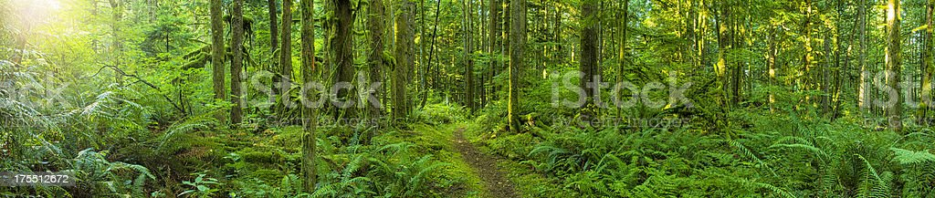 Tranquil Forest Panoramic stock photo
