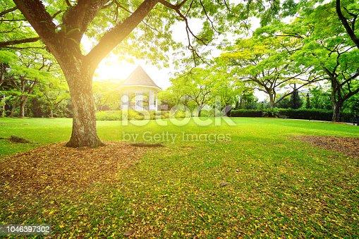 Tranquil garden at sunset sunlight, Singapore.
