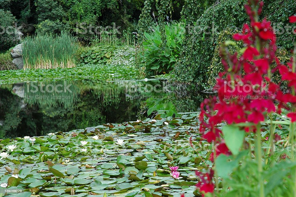 Tranquil garden royalty-free stock photo