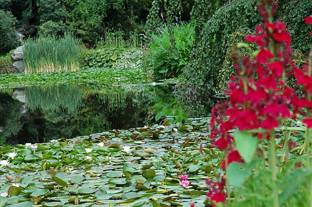 Jardin paisible - Photo