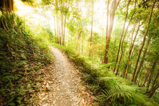 en lugn vandringsled i en skog vid soluppgången. - earth from space bildbanksfoton och bilder