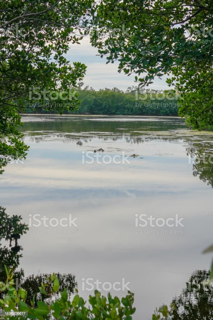 Tranquil Lake at J. N. 'Ding' Darling National Wildlife Refuge stock photo