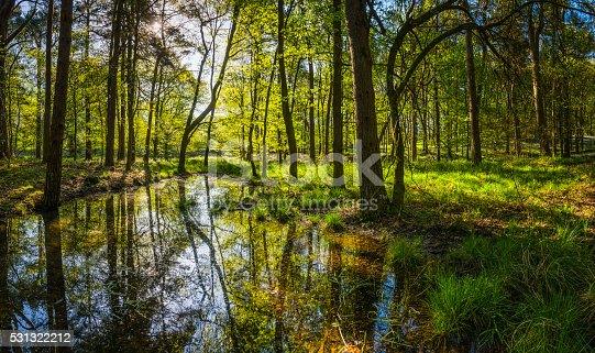 Early morning sunlight filtering through the green foliage of an tranquil forest clearing to illuminate the wildflowers and bluebells in this idyllic woodland glade. ProPhoto RGB profile for maximum color fidelity and gamut.