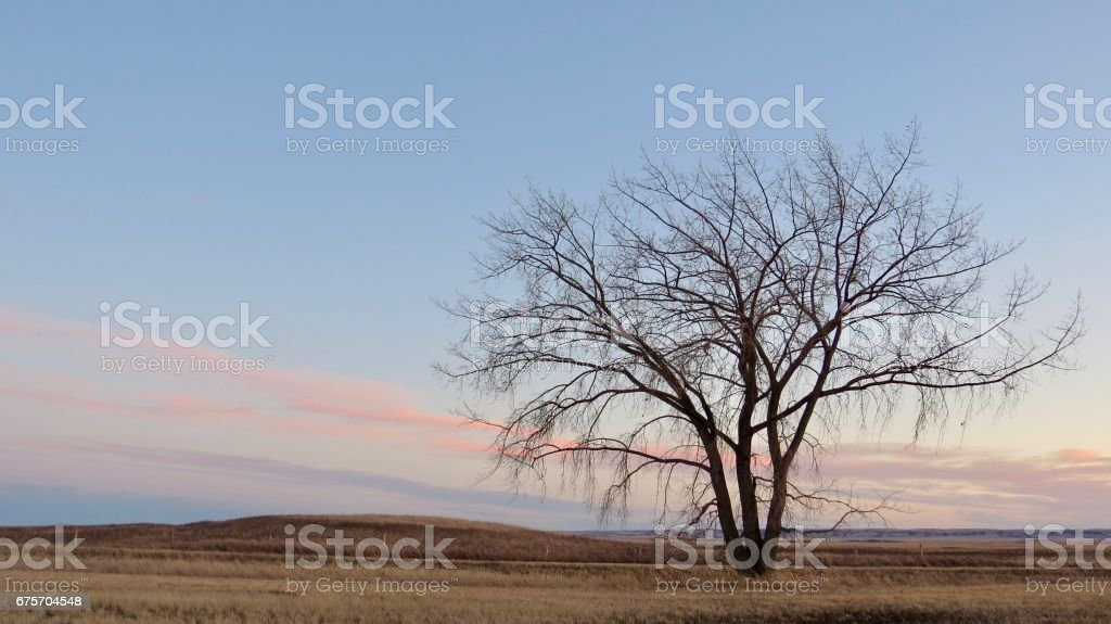 Tranquil prairie sunset with a lonely tree royalty-free stock photo