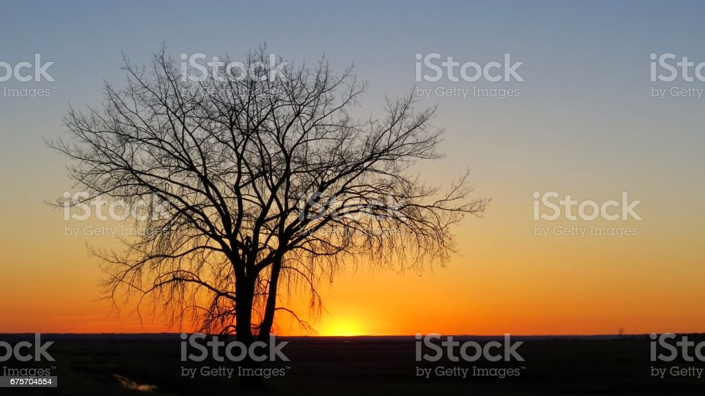 Tranquil prairie sunset with a lonely tree 免版稅 stock photo