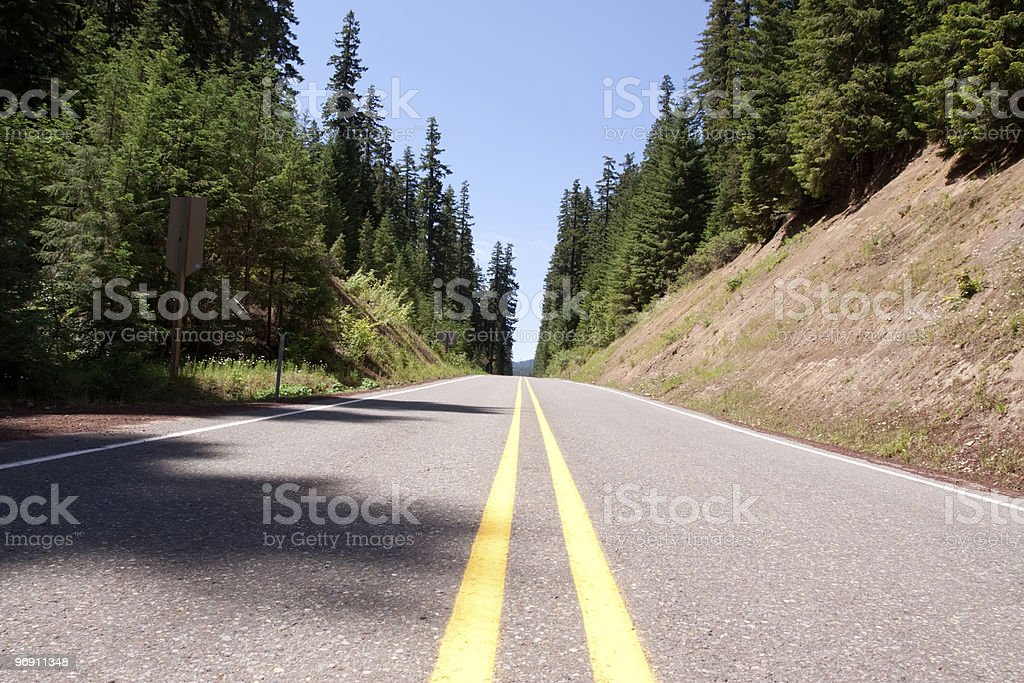 Tranquil road through pine trees royalty-free stock photo