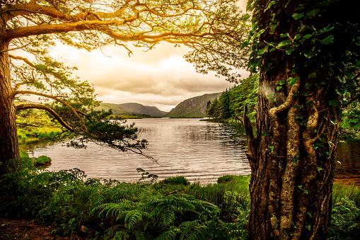 Tranquil Scene from Killarney National Park, Ireland