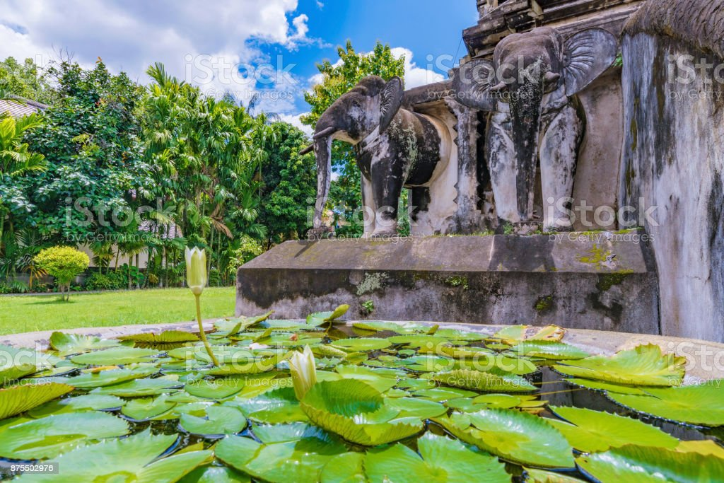 Tranquil scene of water lilies stock photo