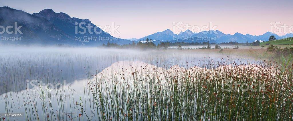 tranquil scene with reed at lake banwaldsee, bavaria, germany stock photo