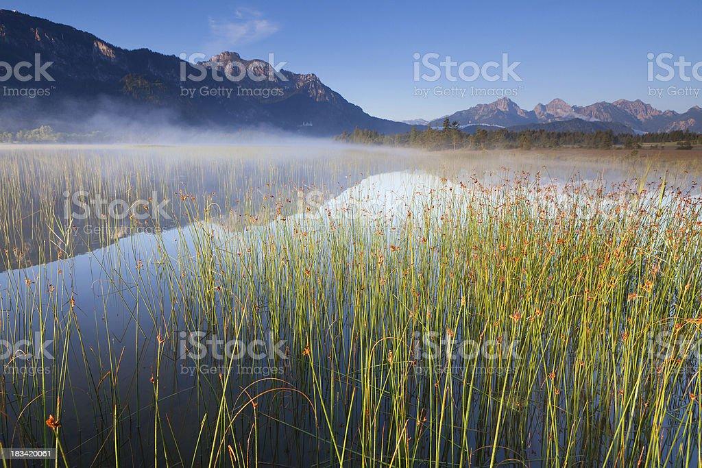 tranquil scene with reed at lake banwaldsee, bavaria, germany royalty-free stock photo