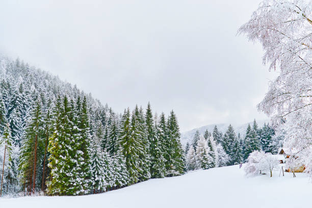 Tranquil scenery with snow stock photo