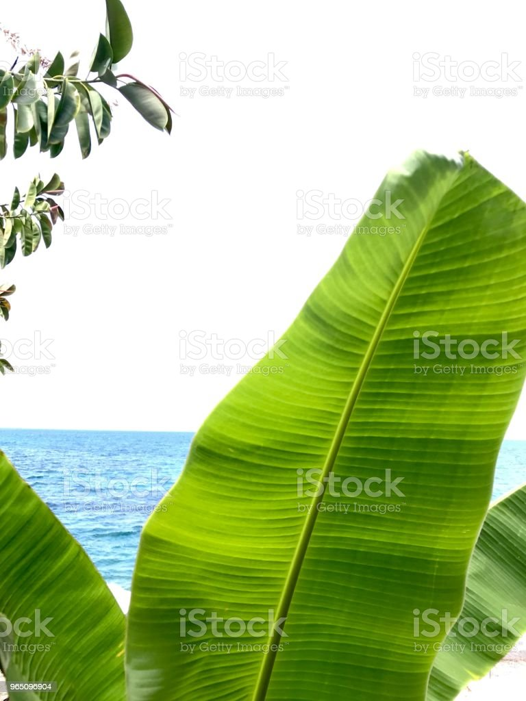 Tranquil sea sight through banana trees zbiór zdjęć royalty-free