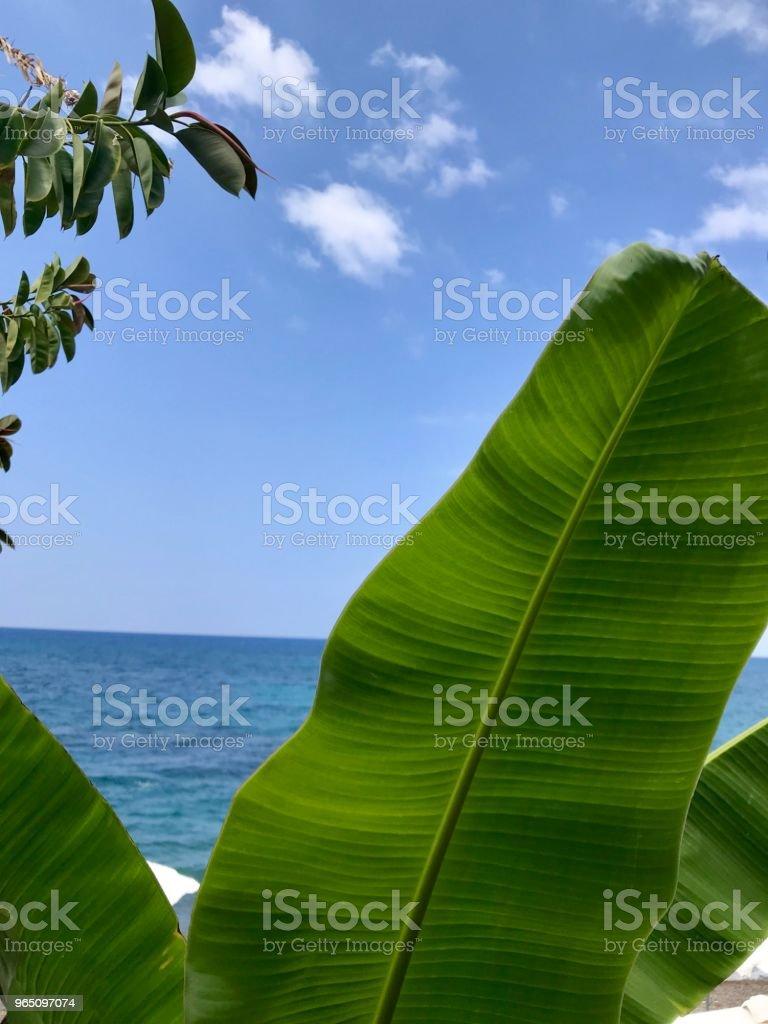 Tranquil sea sight through banana trees royalty-free stock photo
