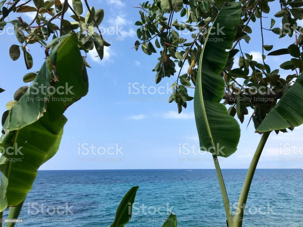 Tranquil sea sight through banana trees zbiór zdjęć royalty-free