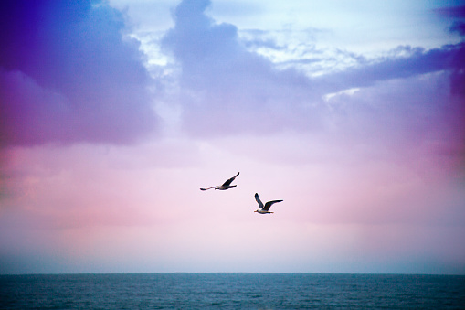 Tranquil seascape at dusk and seagulls.
