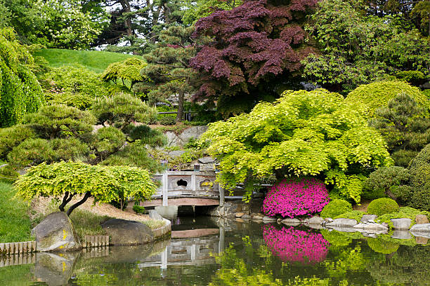 Tranquil secluded Japanese Garden with pond stock photo