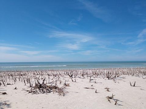 tranquil shore with mangrove stumps at Honeymoon Island, FL