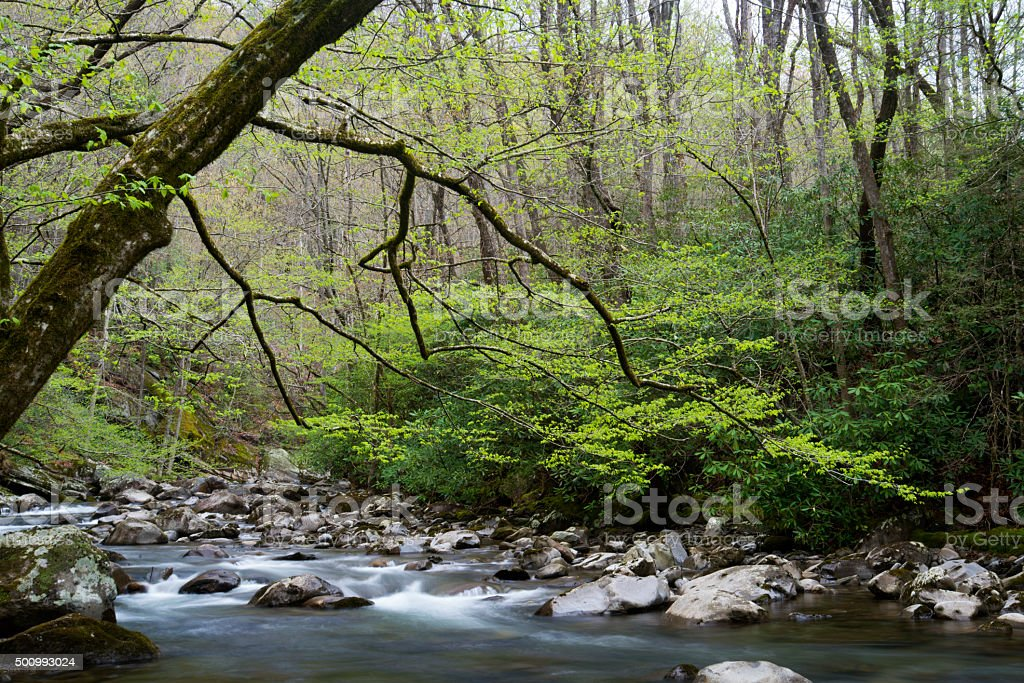 Tranquil stream in The Great Smoky Mountains in spring. stock photo