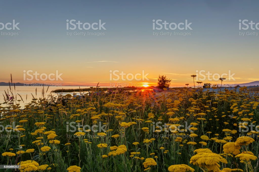Tranquil sunset view of seaside beach, with flowers in the foreground stock photo