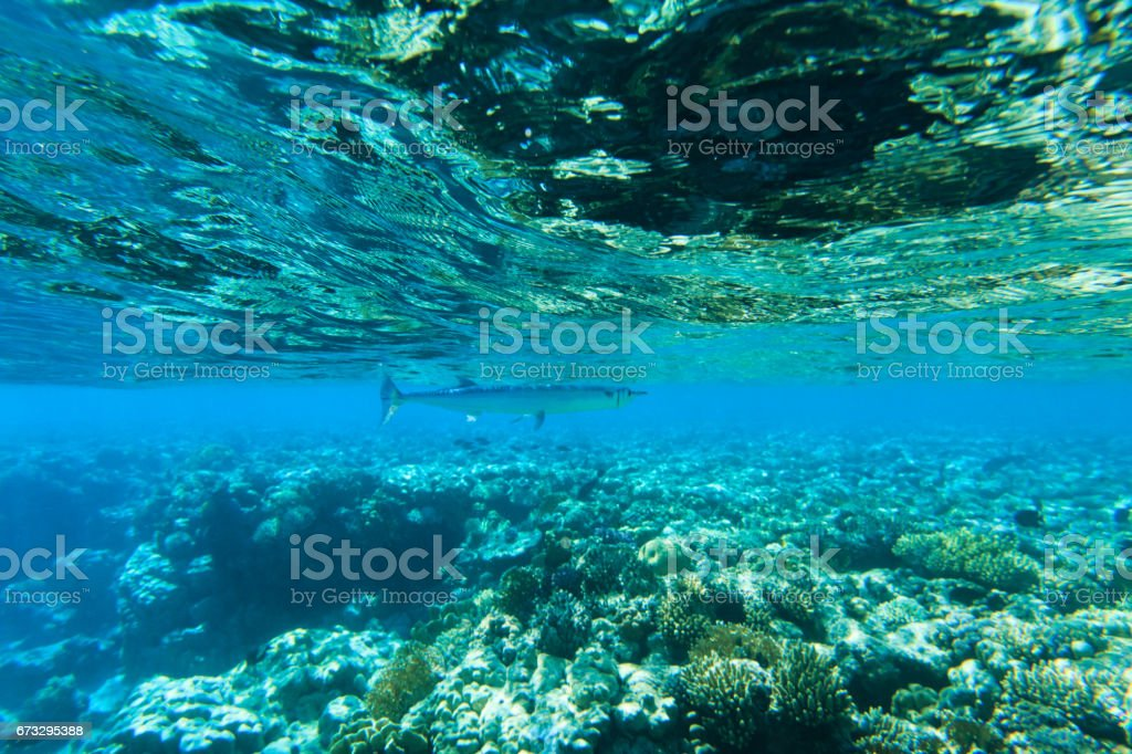 Tranquil underwater royalty-free stock photo