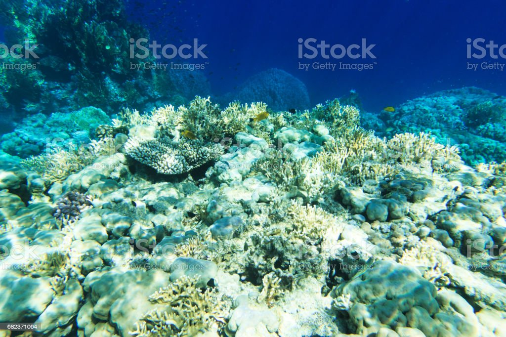 Tranquil underwater royalty free stockfoto