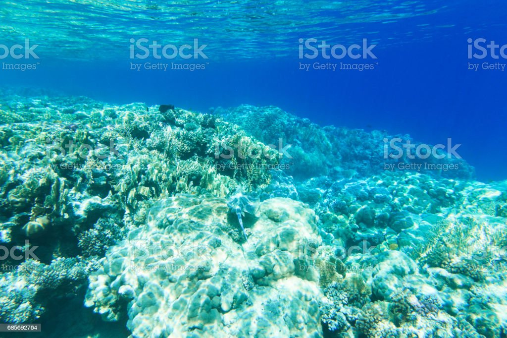 Tranquil underwater foto de stock royalty-free