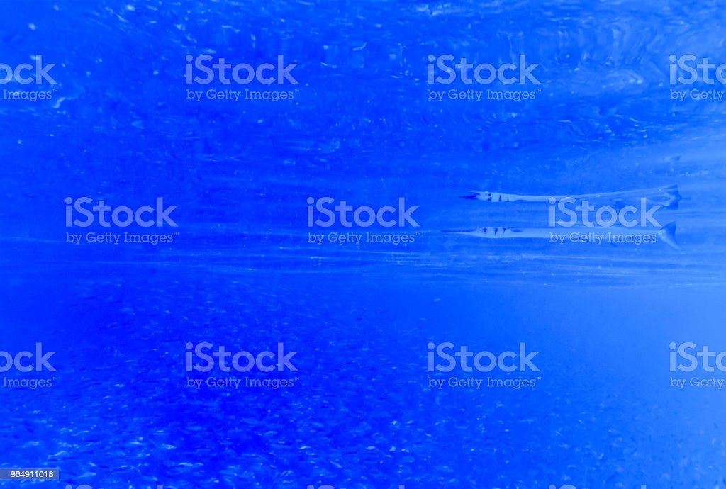 Tranquil underwater scene with copy space royalty-free stock photo