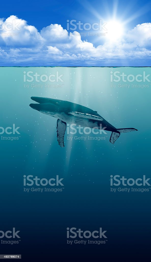 tranquil underwater view with humpback whale stock photo