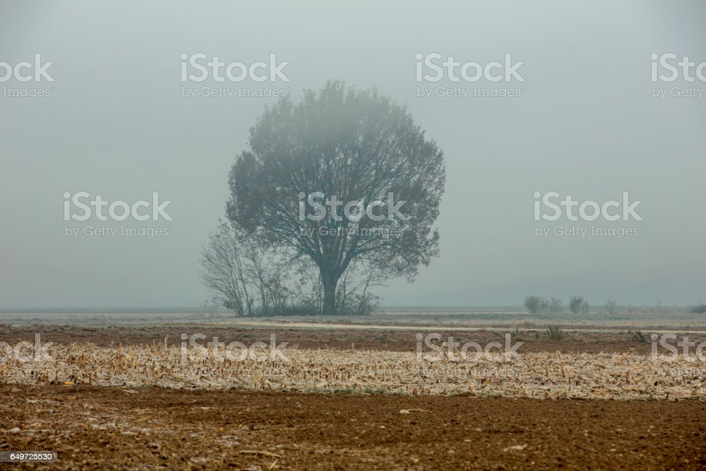 Tranquil view of tree on field in foggy weather stock photo