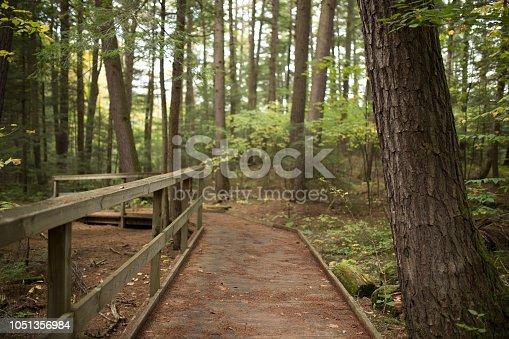Tranquil Walking Bridge Through Adirondack Forst Covered with Pine Needles