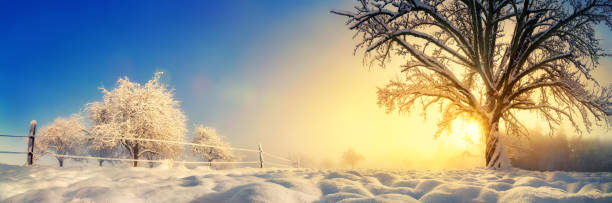 Tranquil winter landscape in the morning stock photo