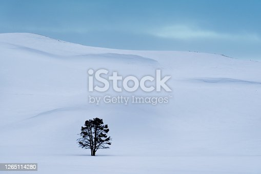Lone tree in Hayden Valley, winter landscape, Yellowstone National Park, UNESCO World Heritage Site, Wyoming, USA, North America