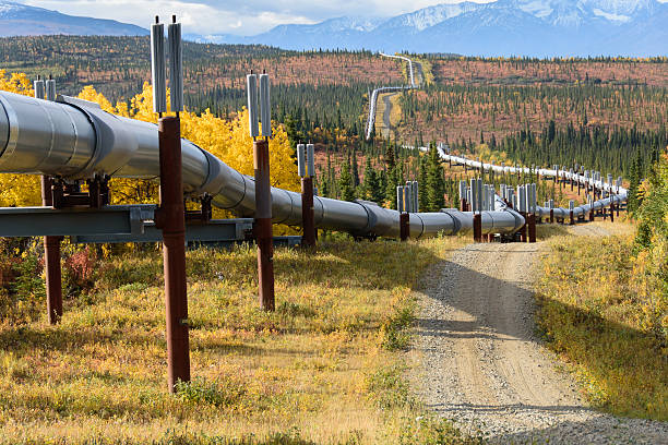 Trans Alaska Pipeline with Autumn Colors Trans Alaska Pipeline with Autumn Colors wildlife reserve stock pictures, royalty-free photos & images