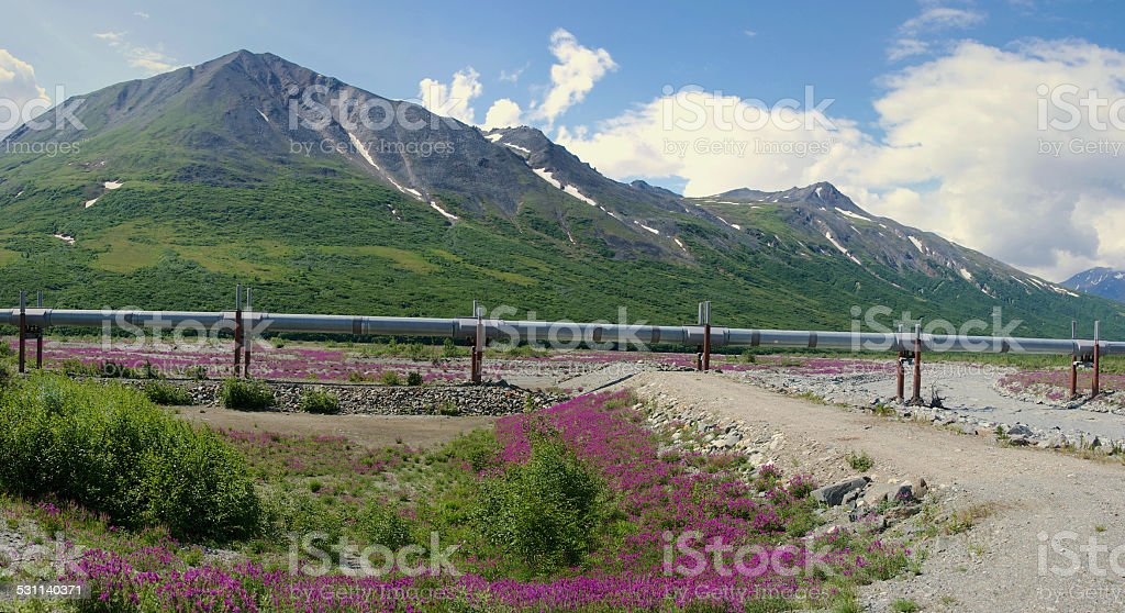 Trans-Alaskan Pipeline with Mountains and Flowers stock photo