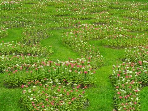 Transformeren Van De Bloemen In Vers Groen Gazon Het Ziet Er Verfrissend Mooi In De Zomer Gelukkig En Vrij Uit De Natuur Stockfoto en meer beelden van Aanraken