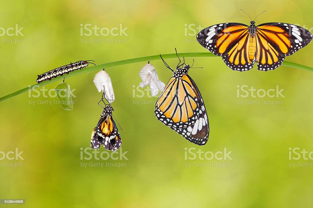 Best Caterpillar Stock Photos  Pictures  U0026 Royalty