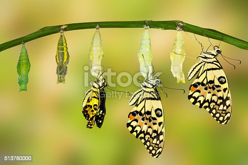 istock Transformation of Lime Butterfly 513760000