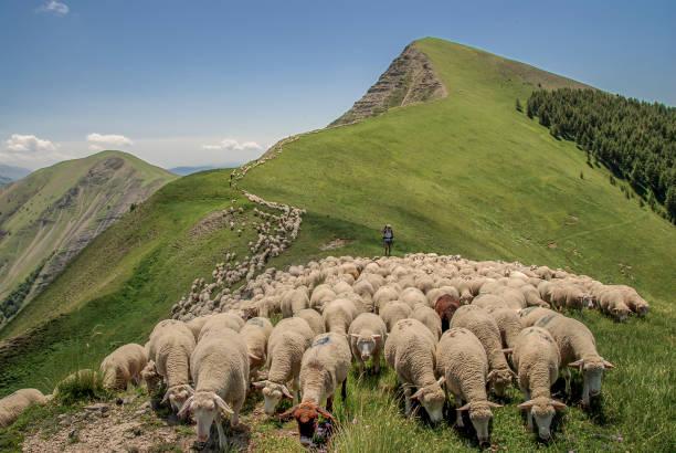 Transhumance Ligne de crête dans les Alpes de Haute Provence herding stock pictures, royalty-free photos & images