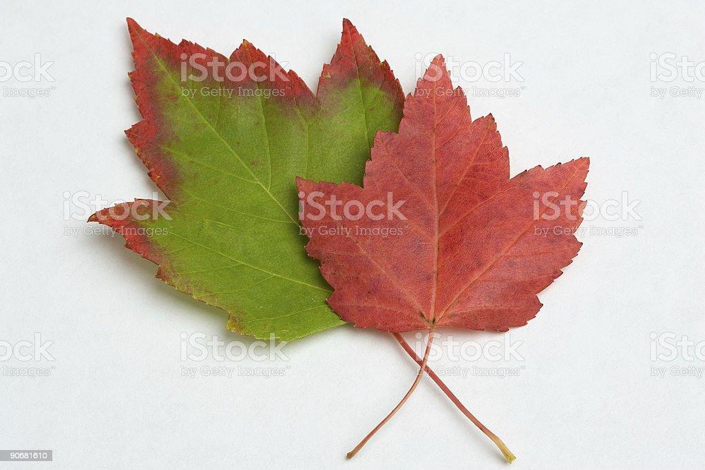Transition royalty-free stock photo