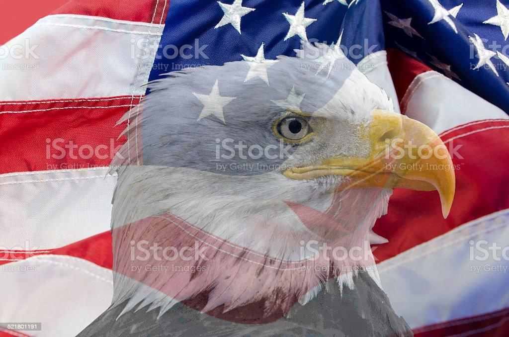 Transparent Bald Eagle Image Over USA Flag stock photo