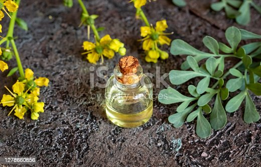 A transparent bottle of essential oil with fresh common rue, or Ruta graveolens flowers