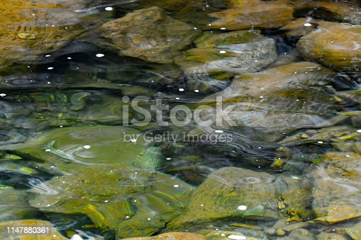 1037450870 istock photo Transparent, calm and clean water at rainy day 1147880361