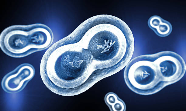 transparent cells with nucleus, cell membrane and visible chromosomes - chromosoom stockfoto's en -beelden