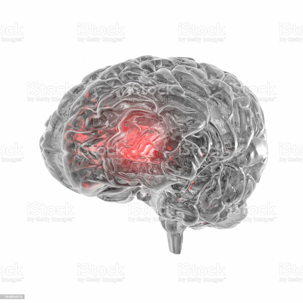 Transparent human Brain isolated on white background stock photo