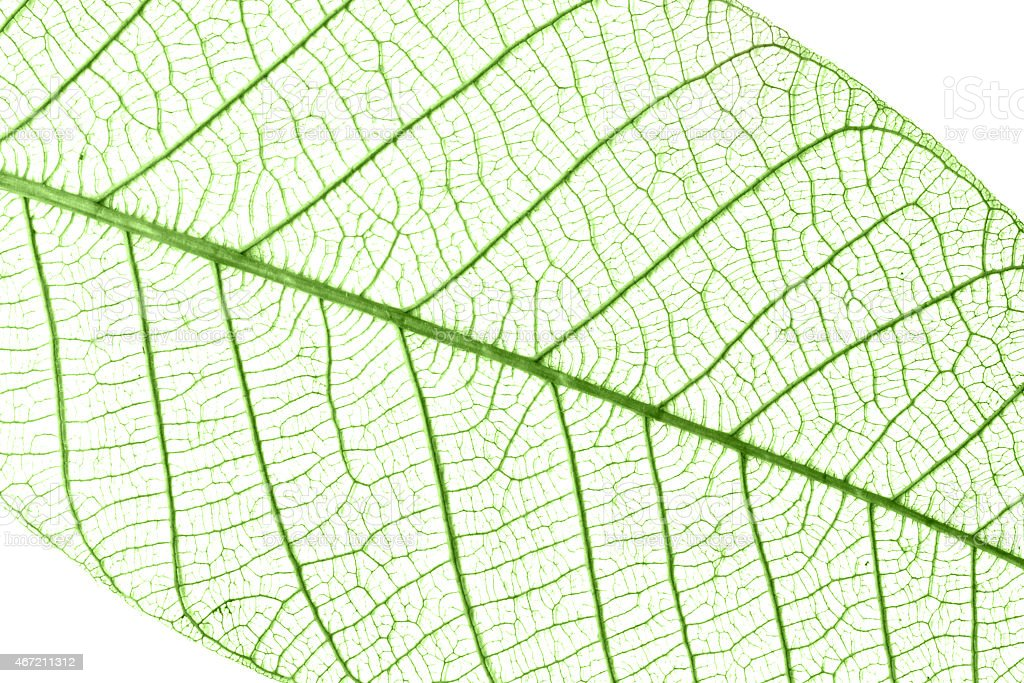 Transparent leaf background stock photo