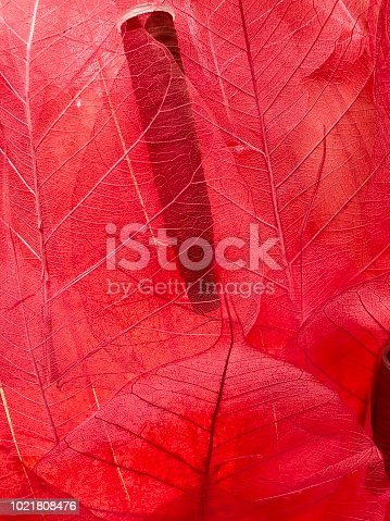 1155045999istockphoto Transparent red leaves 1021808476