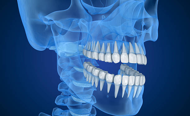 transparent scull and teeth , xray view . 3d illustration . - dentine stockfoto's en -beelden