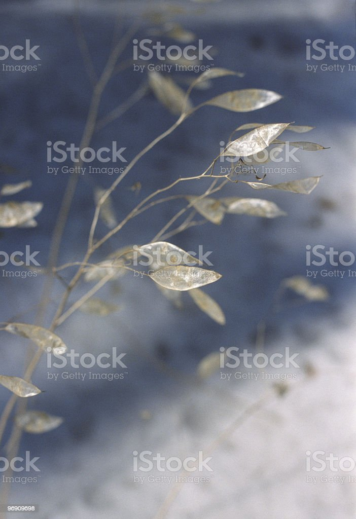 transperent sheet of a plant royalty-free stock photo