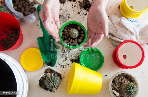 transplanting small green cactus in a pot on the table top view